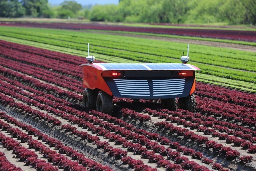 robot agrícola RIPPA