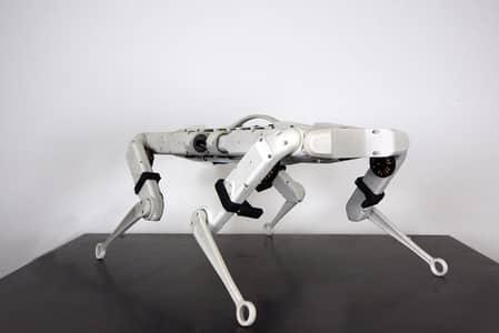 Perro robot SOLO 12 de PAL Robotics